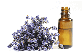 Health Benefits of Lavender Oil